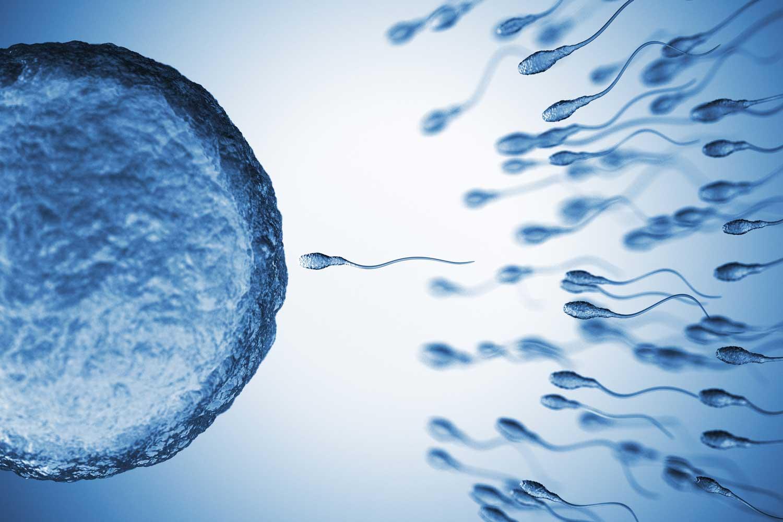 Η διαδρομή του σπέρματος